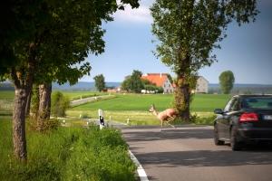 Der Bußgeldkatalog behandelt eine Geschwindigkeitsüberschreitung auf der Landstraße und auf der Autobahn gleich.
